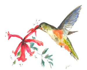 Hummingbirdsrescue