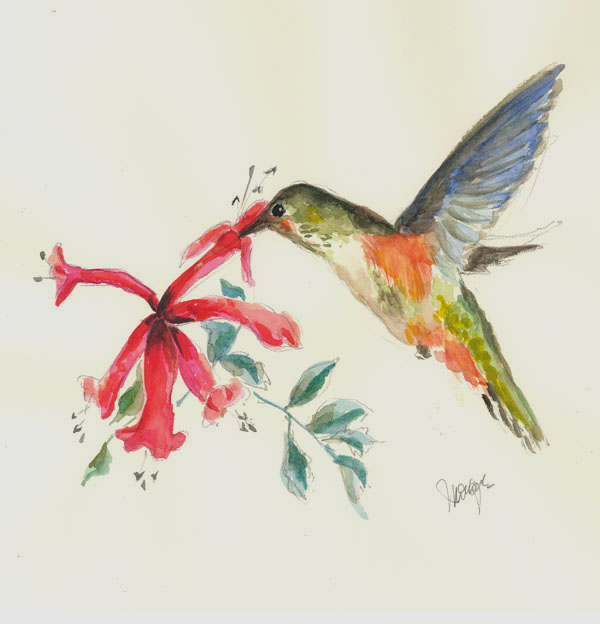 Watercolor drawing of Hummingbird