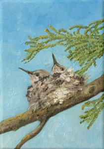 Anna's Hummingbird nestlings Juniper